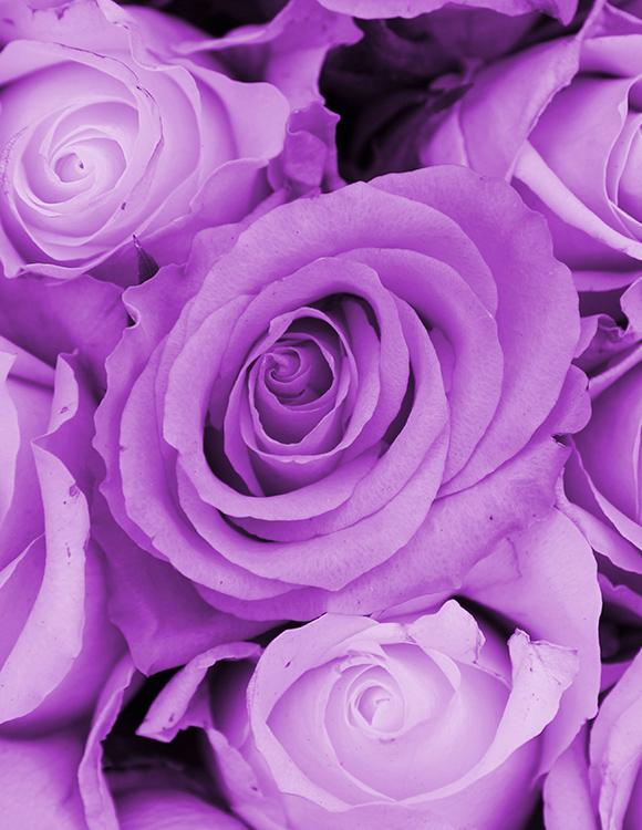 Code Couleur Couleurs Des Roses