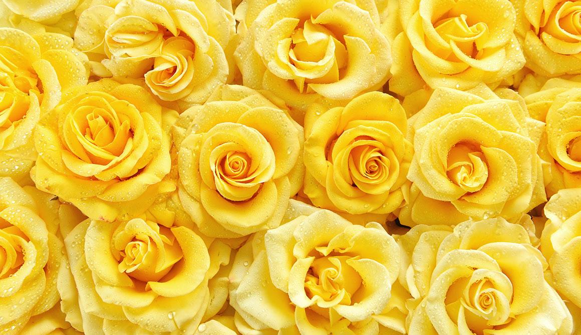 Code Couleur Jaune Les Roses