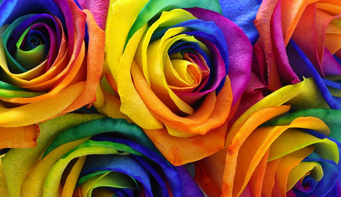 Code Couleur Multicolores Les Roses