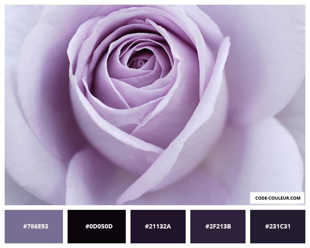 Code Couleur Lilas Les Roses