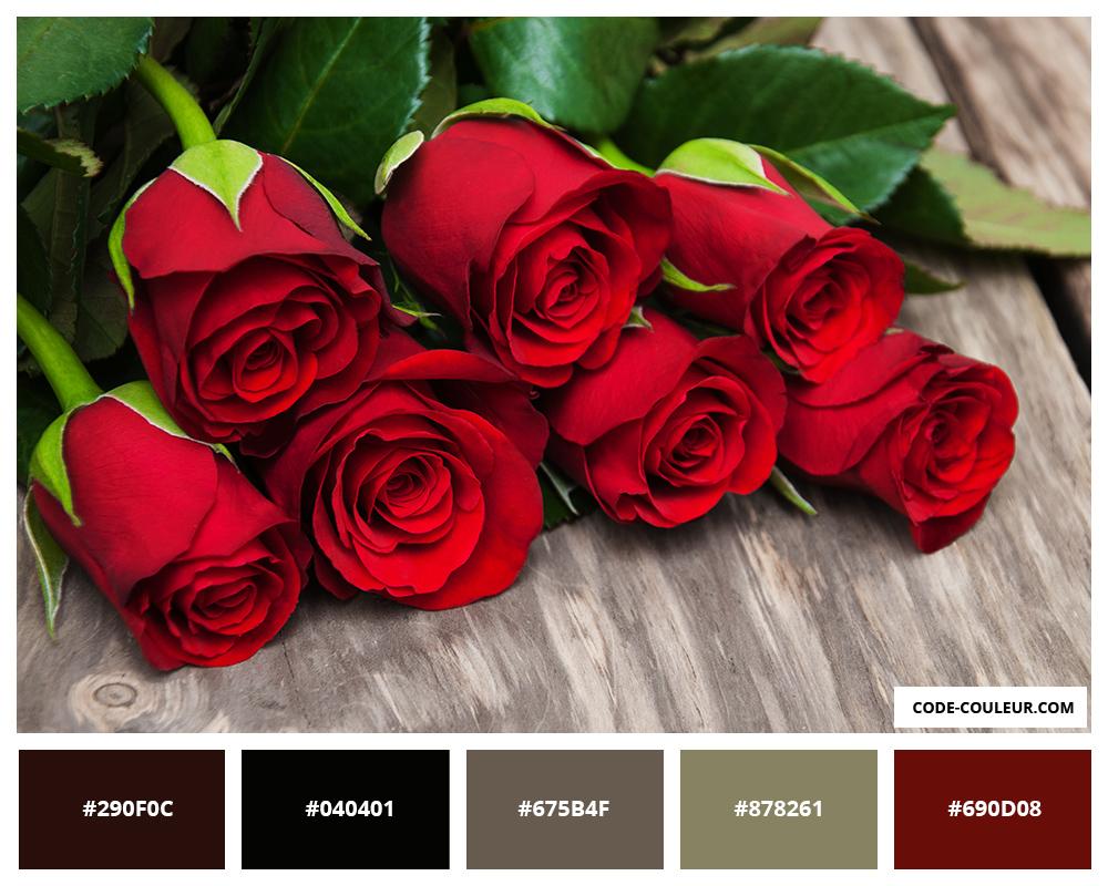 Couleurs Des Roses Signification Des Couleurs Des Roses