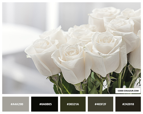 Bouquet de rose blanc